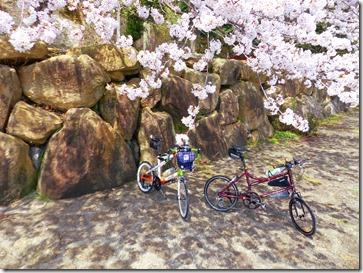 琵琶湖桜10選
